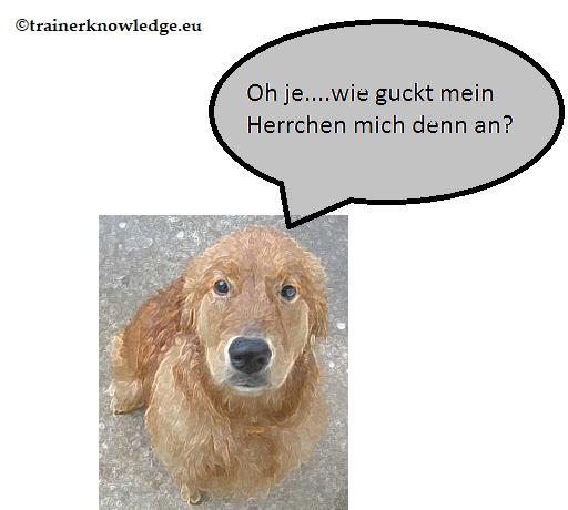 Ein Hund registriert den Gesichtsausdruck seines Herrchen und zeigt Schuldbewusstein.